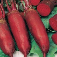 Rödbeta BEETROOT Cylindra-Frö till Rödbeta