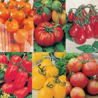 Tomat TOMATOES COLLECTION-Frö till Tomat