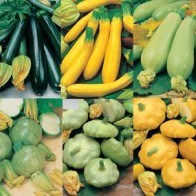 Pumpa COURGETTES & SUMMER SQUASH COLLECTION-Frö till Pumpa