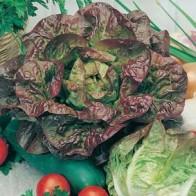 Sallad LETTUCE Mixed Green Leaves-Frö till Sallad
