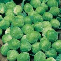 Brysselkål BRUSSELS SPROUT Green Marble F1#, Frö till Brysselkål