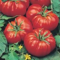 Tomat TOMATO Marmande, Frö till Tomat