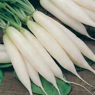 Rädisa RADISH Long White Icicle-Frö till Rädisa