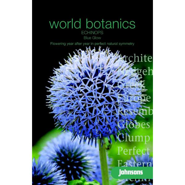 Bolltistel ECHINOPS - Blue Glow, Frö till Bolltistel