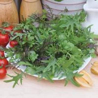 Speedy Salads, MIXED LEAVES Fancy Frills, Frö till Sallad
