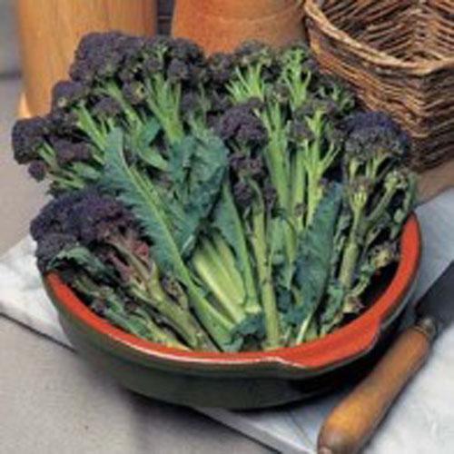 Broccoli BROCCOLI (Sprouting) Red Arrow#, Frö till Broccoli