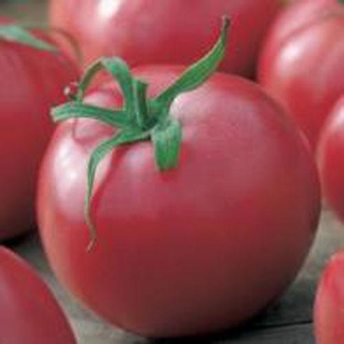 Tomat TOMATO Malinowy Henryka F1#, Frö till Tomat