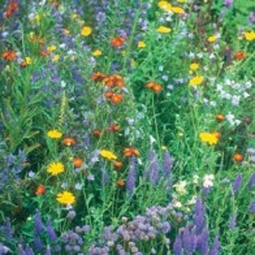Vildfröblandning Vilda blommor - Wildlife Mixture#-Frö till Vildfröblandning