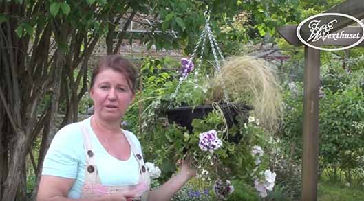 Planteringstips för ampel och hanging basket