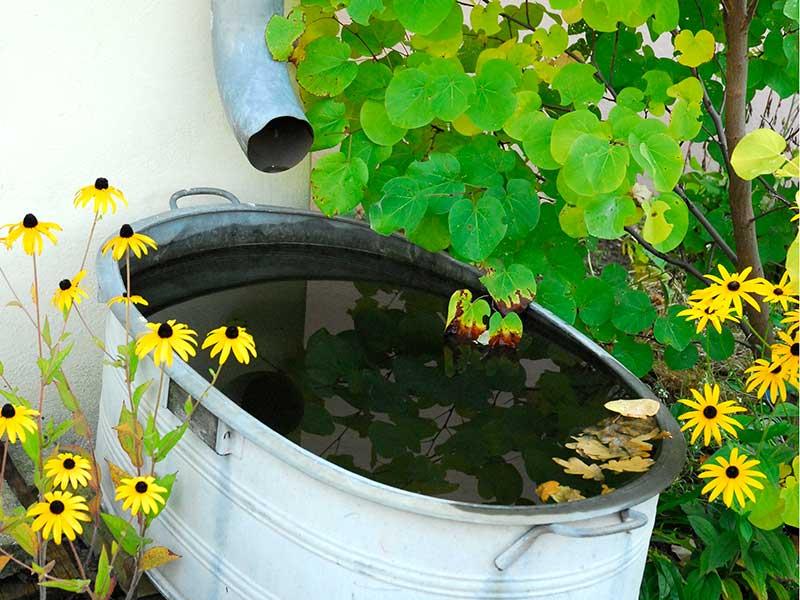 Kan vatten från tak vara skadligt?