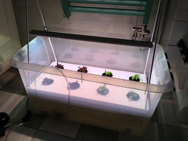 odling-av-sallat-i-hydrokultur.jpg