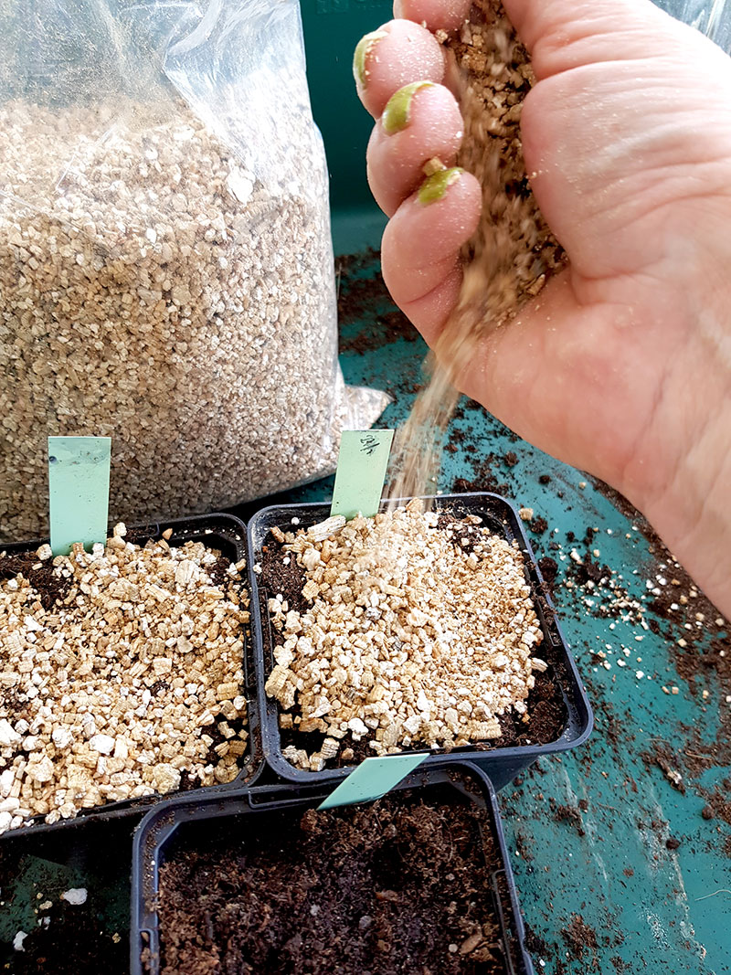 Täckning av frösådder med vermikulit