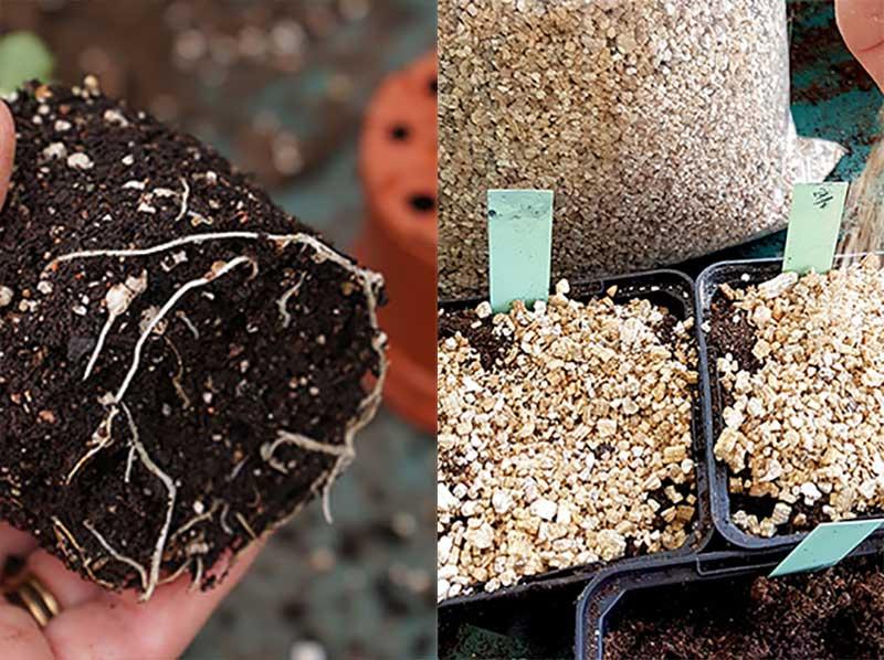 Perlit och vermikulit till odling