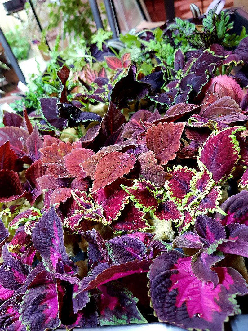 Vilket lysrör ska man ha till växterna på vintern?