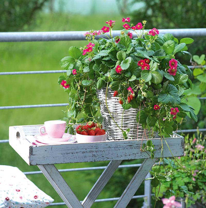 jordgubbe-Toscana.jpg