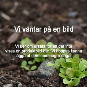 plantering-av-dahlia-knolar.jpg
