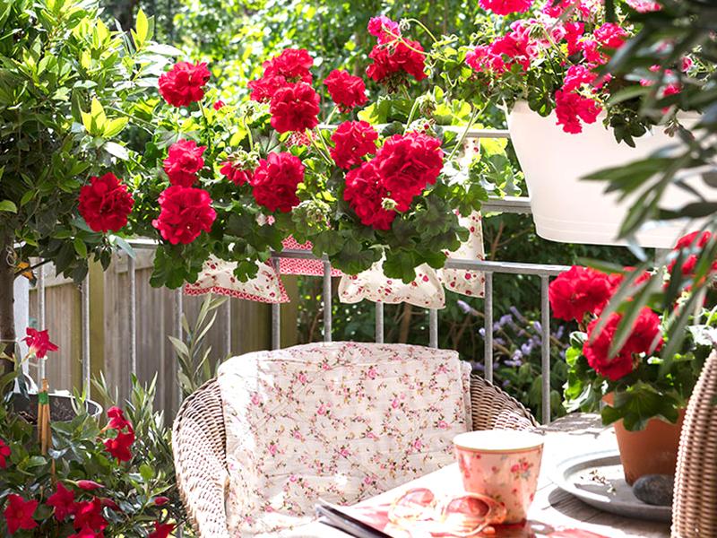 Balkong med sittplats, blommor och medelhavsväxter