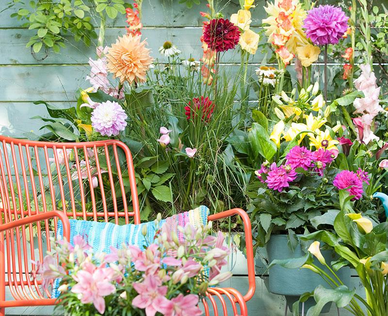 Dahlior och lökväxter på balkong