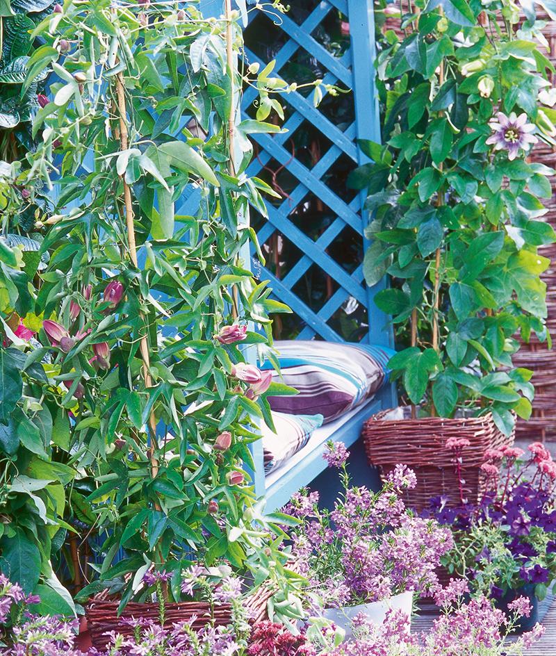 Klätterväxter på balkong