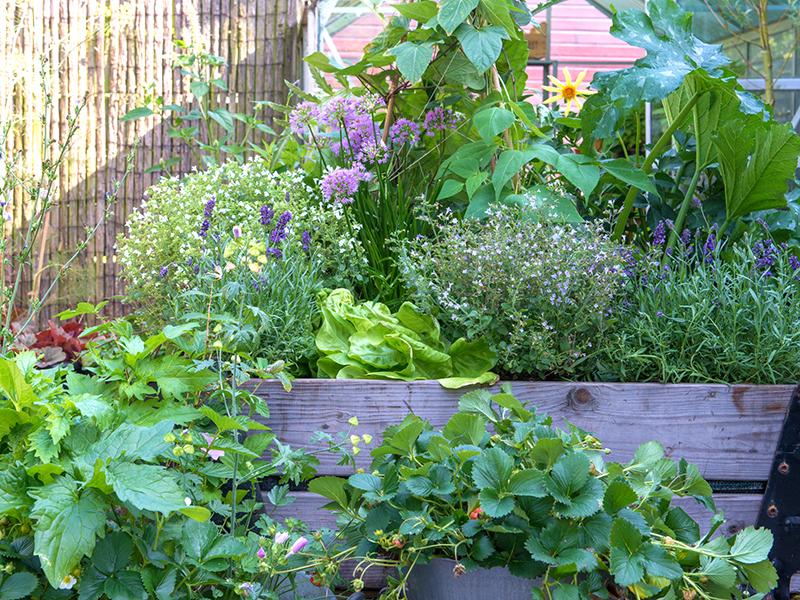 Grönsaker och bär i stor kruka pallkrage på balkong