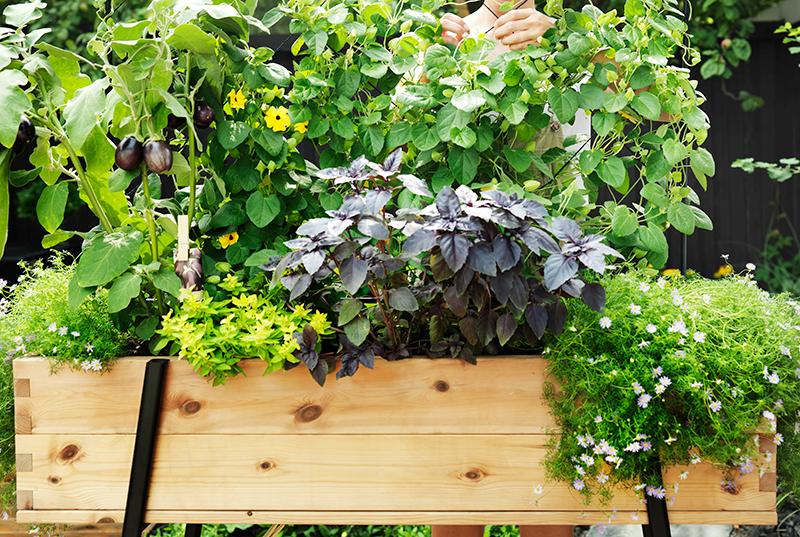 Odlingsbänk med grönsaker och blommor på balkong
