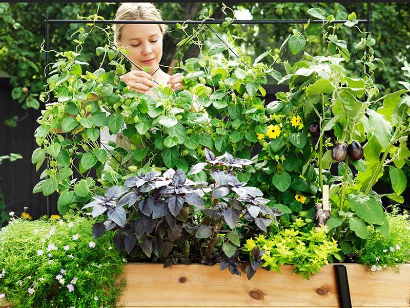 Odlingslåda på balkong med grönsaker och blommor