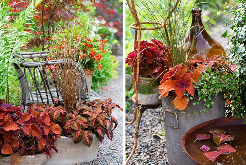 Palettblad i rostfärg i utekruka