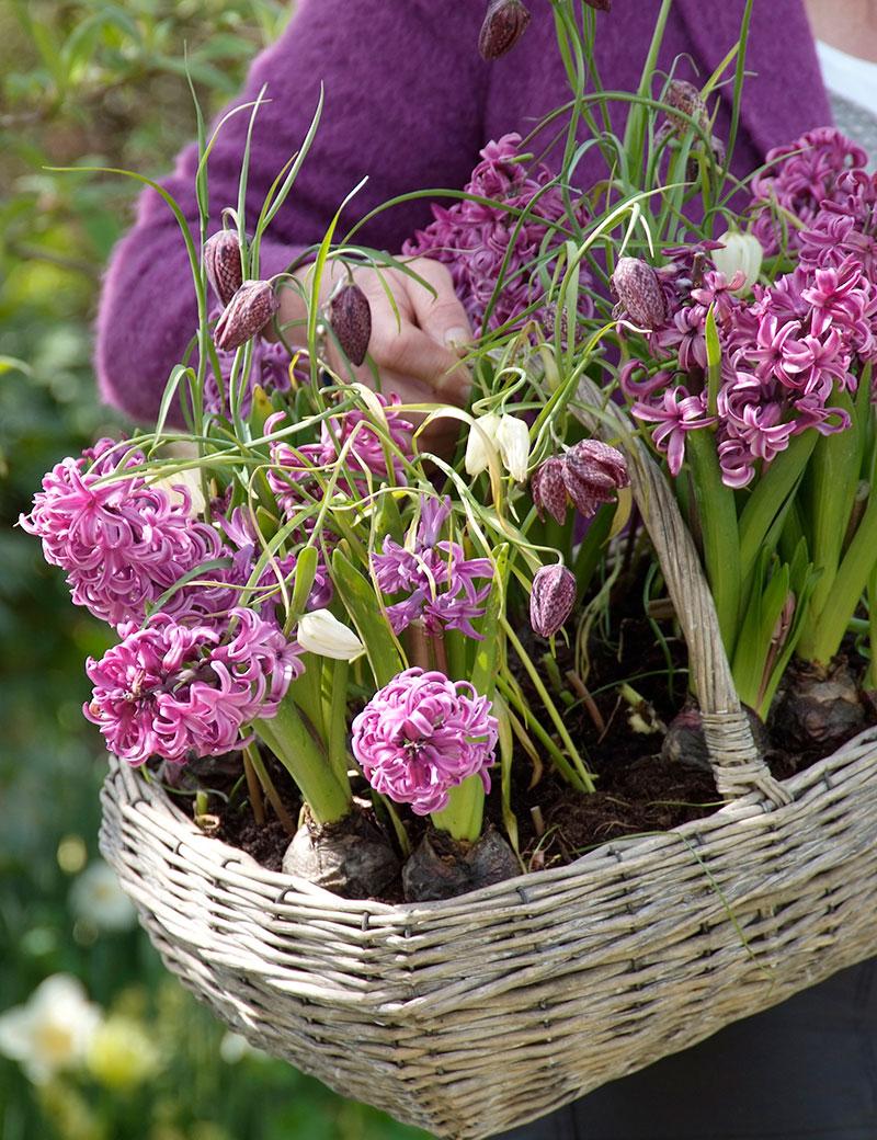 hyacint och kungsängslilja i korg på balkong
