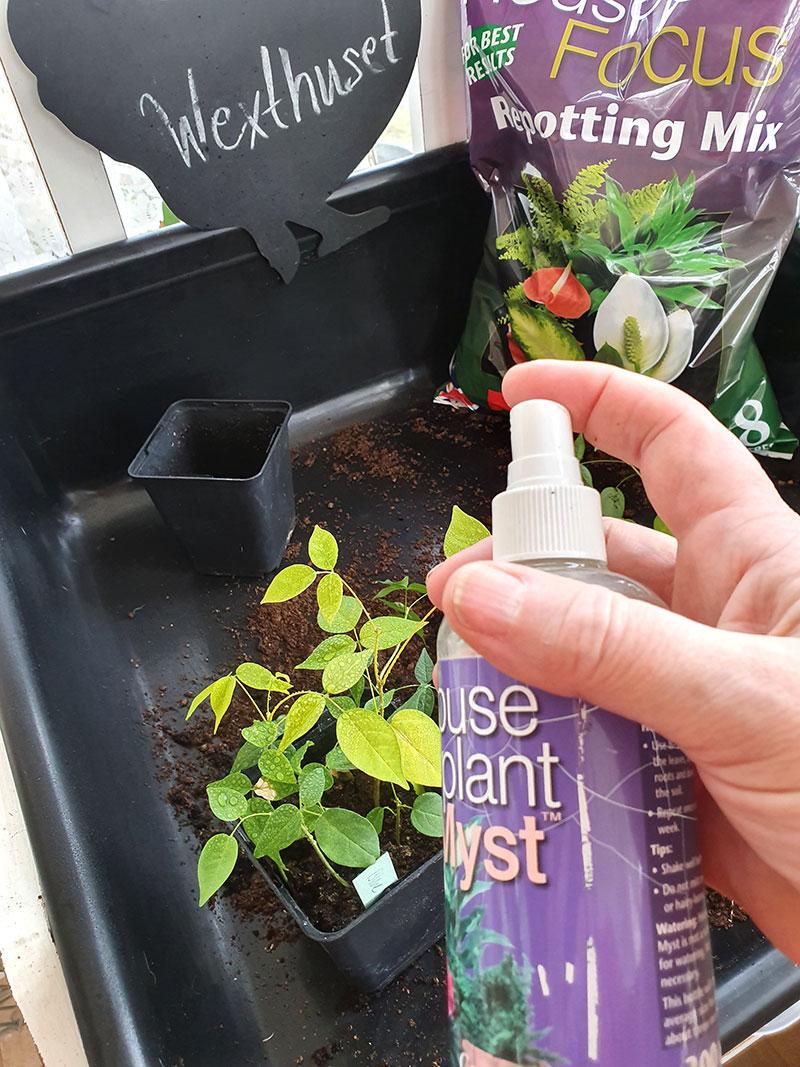 Houseplant myst krukväxtnäring spray som återanvänds