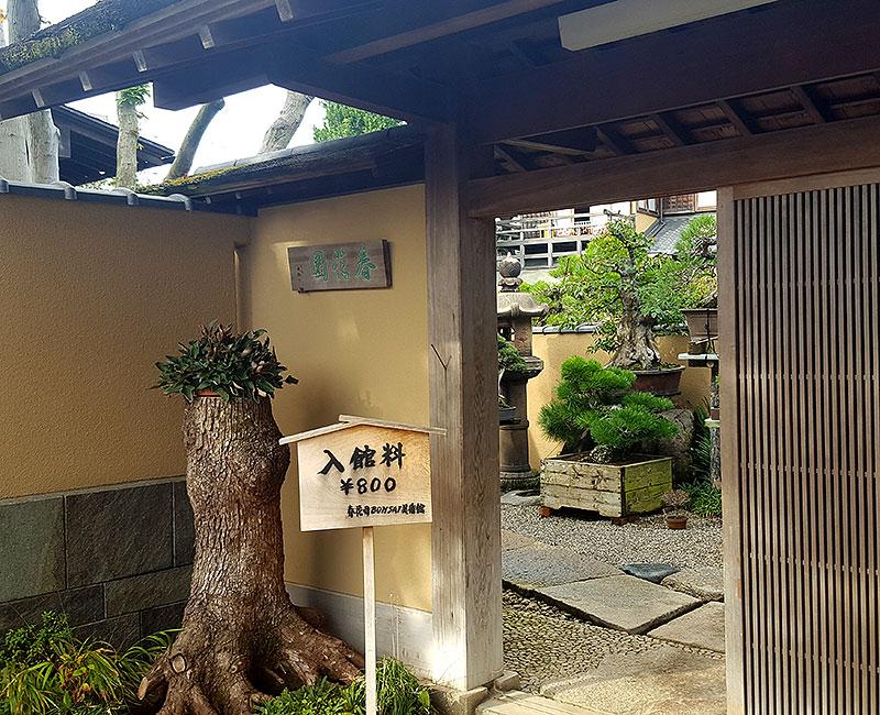 Bonsaimuseium i Tokyo