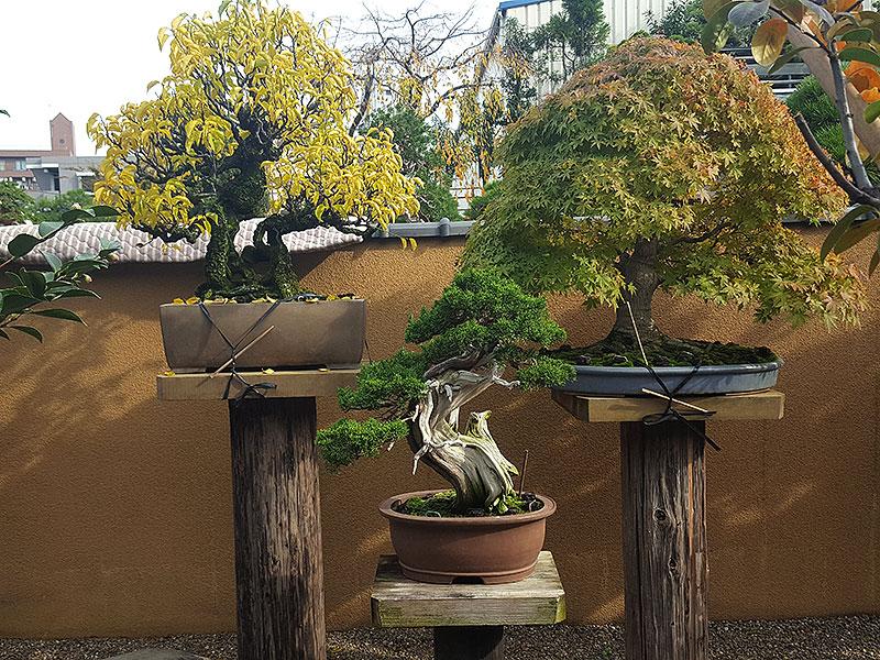 Bonsaier på bonsaiutställning