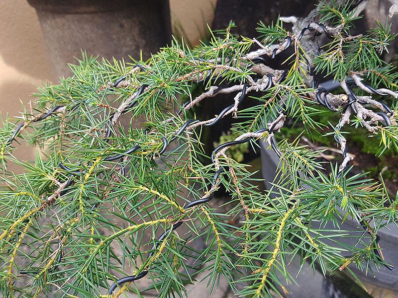 Trådad gren bonsa