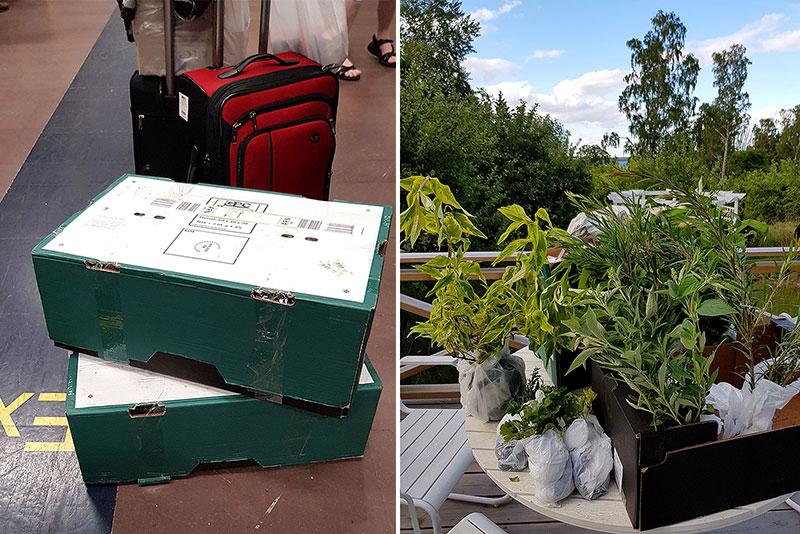 Bagage fullt med växter