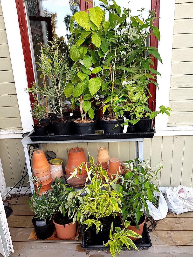 Planterade växter efter resan