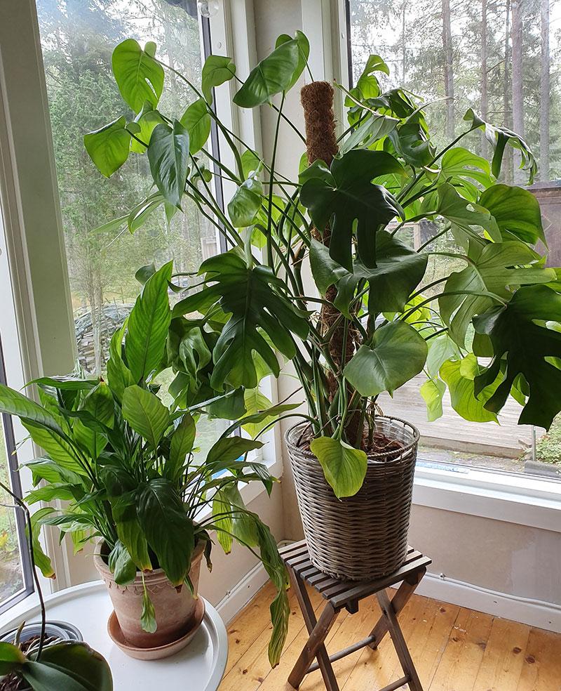 Gröna krukväxter döljer ett fult förråd utanför