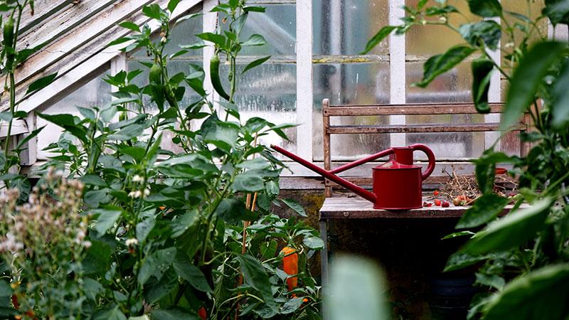 Vattenkanna från Haws i växthuset