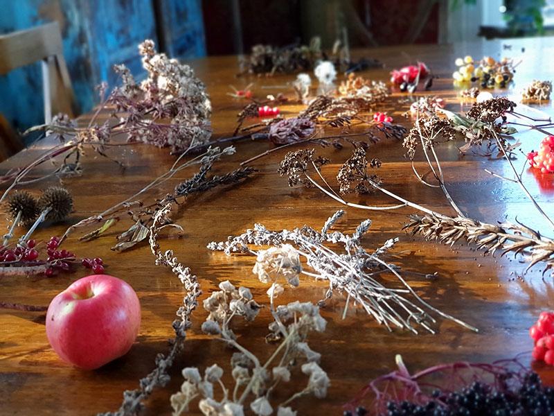 fröer insamlade i trädgården som ska sås i vinter