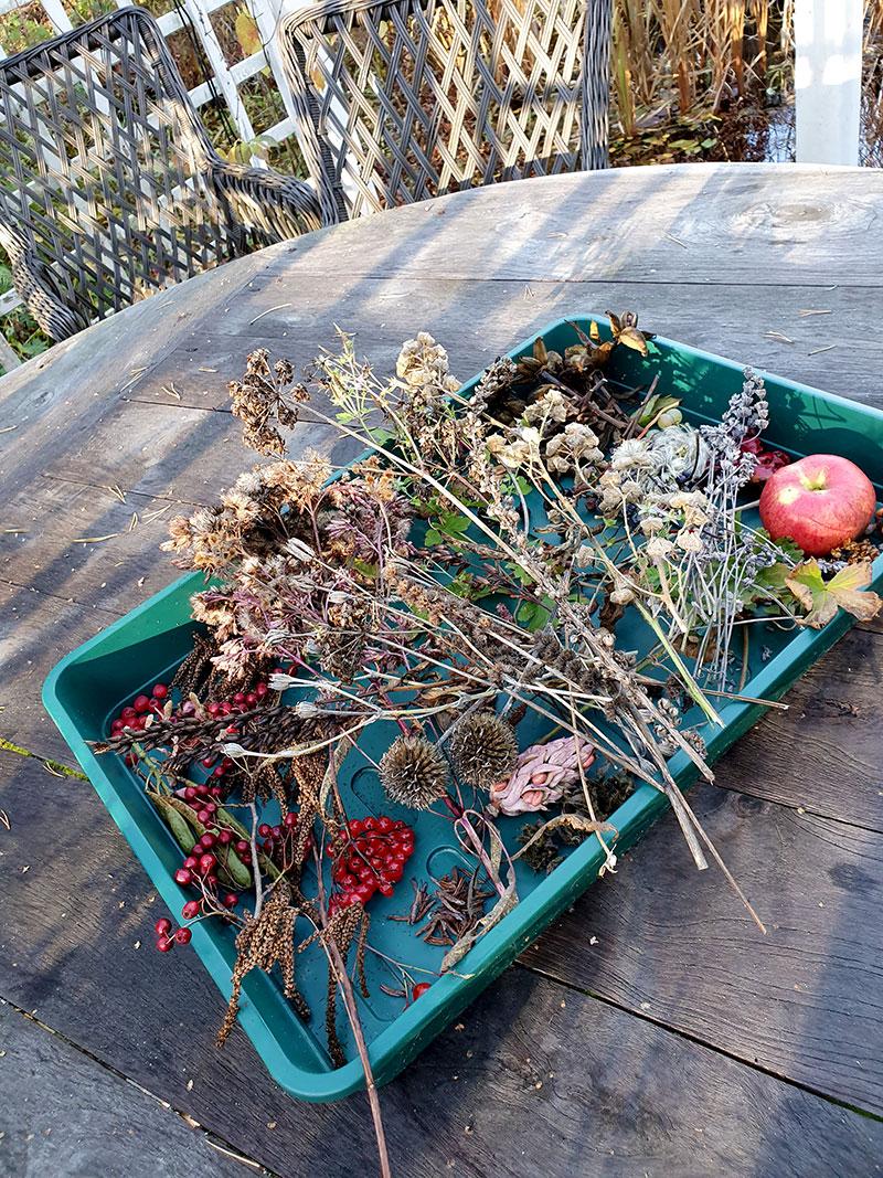Insamlade fröer på en bricka i trädgården