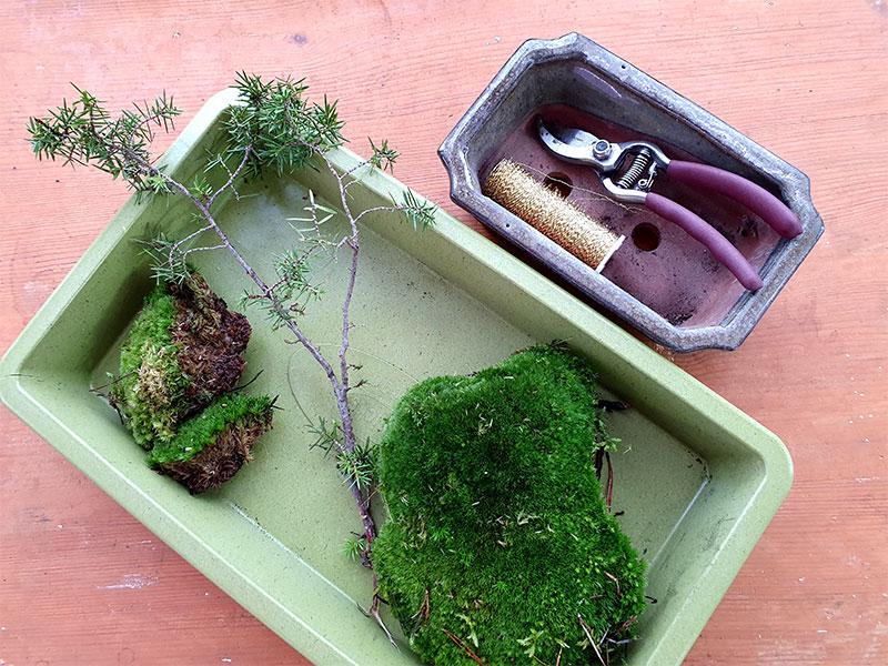 Mossa och engren - material för en fusk-bonsai