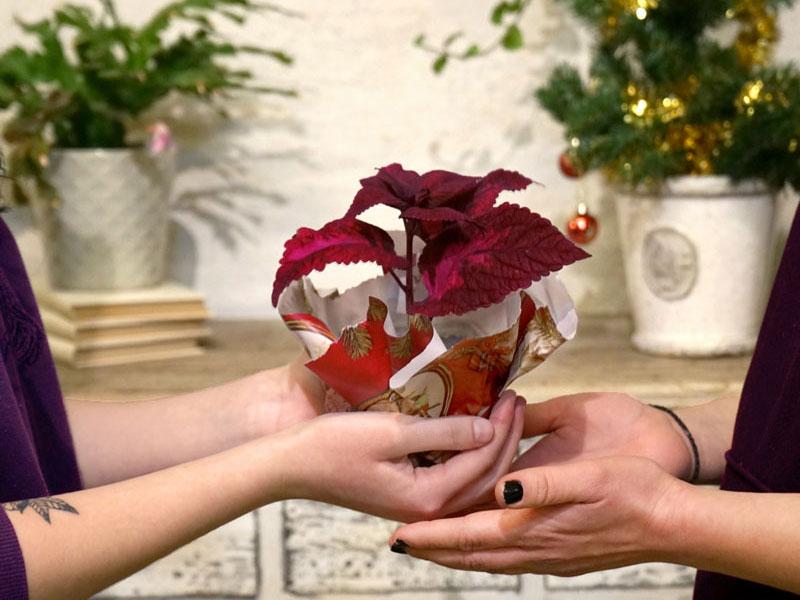 stickling - present till växtälskaren