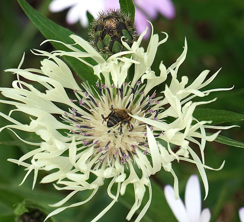 Klint med besök av ett bi
