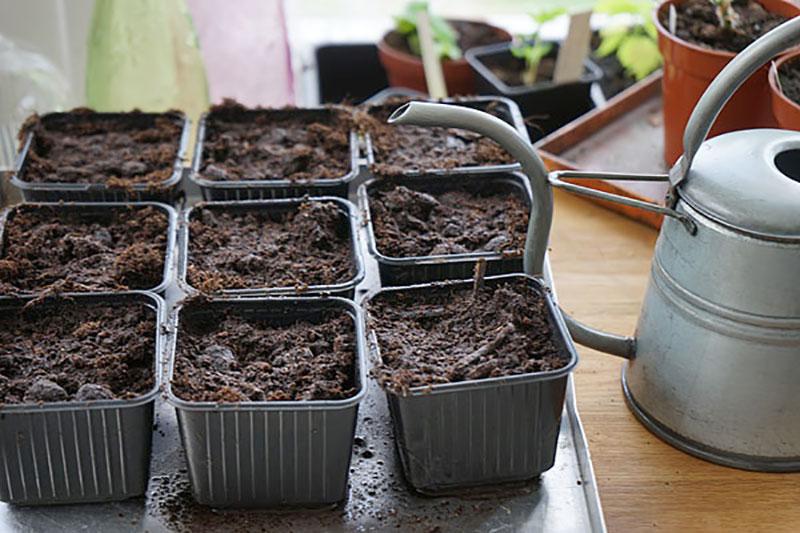 Genomvattnade planteringskrukor inför omplantering