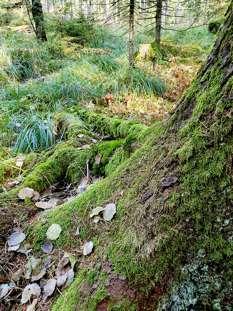 Skogen som inspiration till trädgården