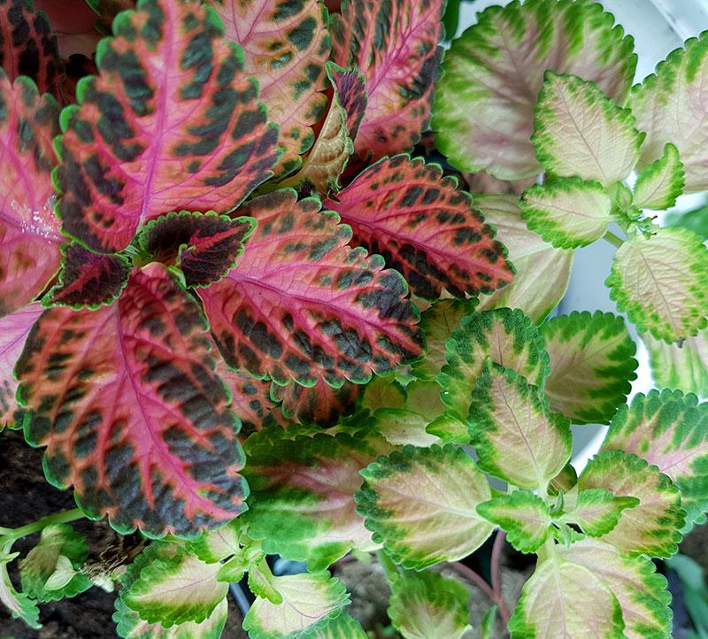 Palettblad i olika nyans pga olika ljus