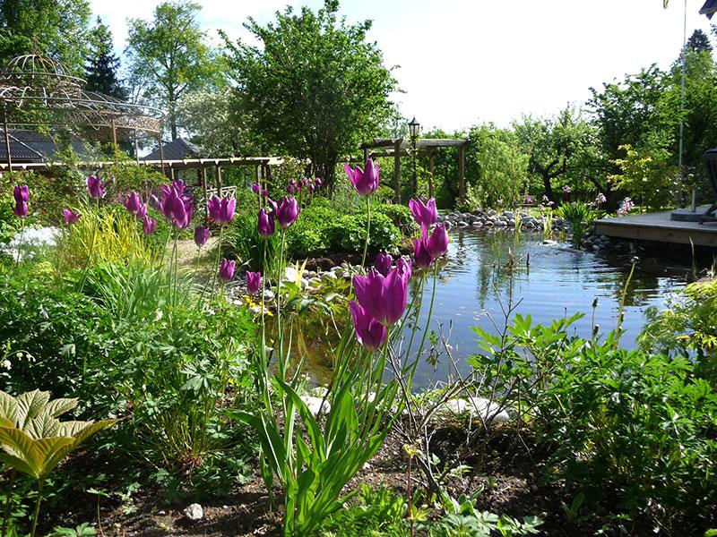 Dammen i min trädgård