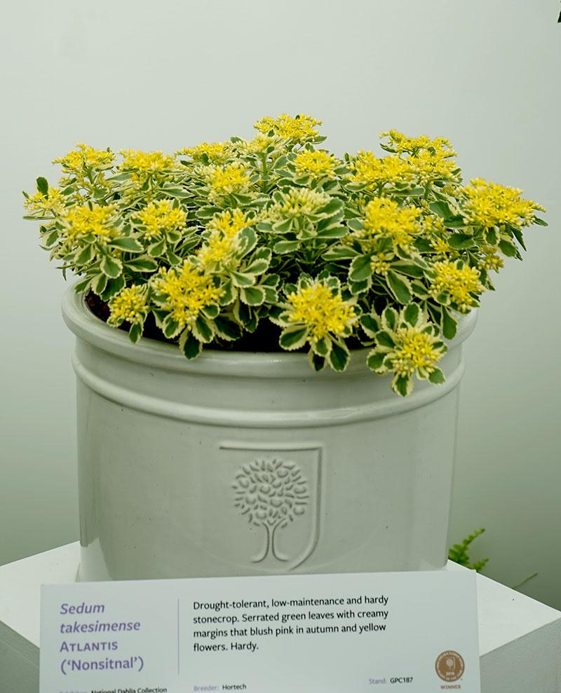 Årets växt på Chelsea Flowershow