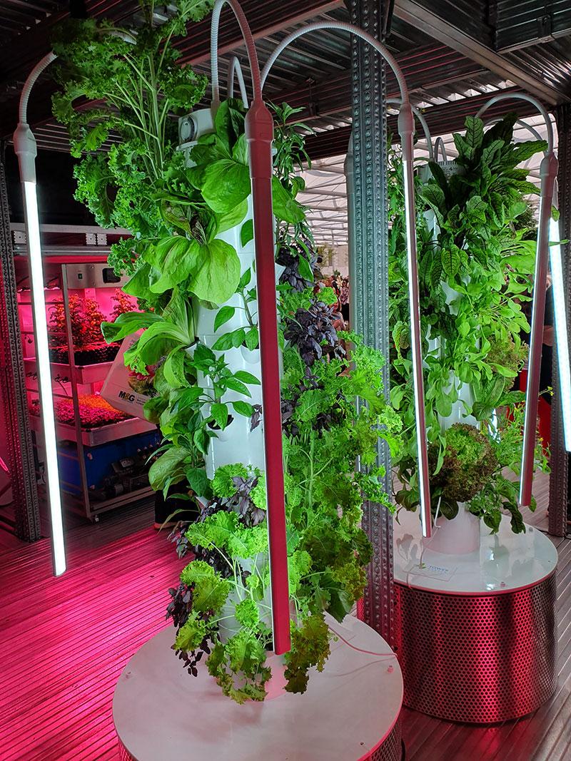 Inomhusodling i hydrokultur i ikeas monter på Chelsea Flowershow
