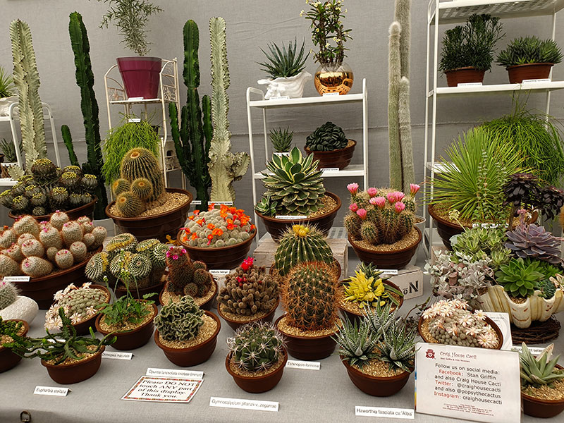 Kaktus och succulenta växter i monter på chelsea flowershow