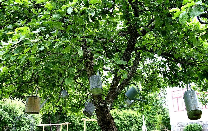 Uttjänta vattenkannor upphängda i ett äppelträd