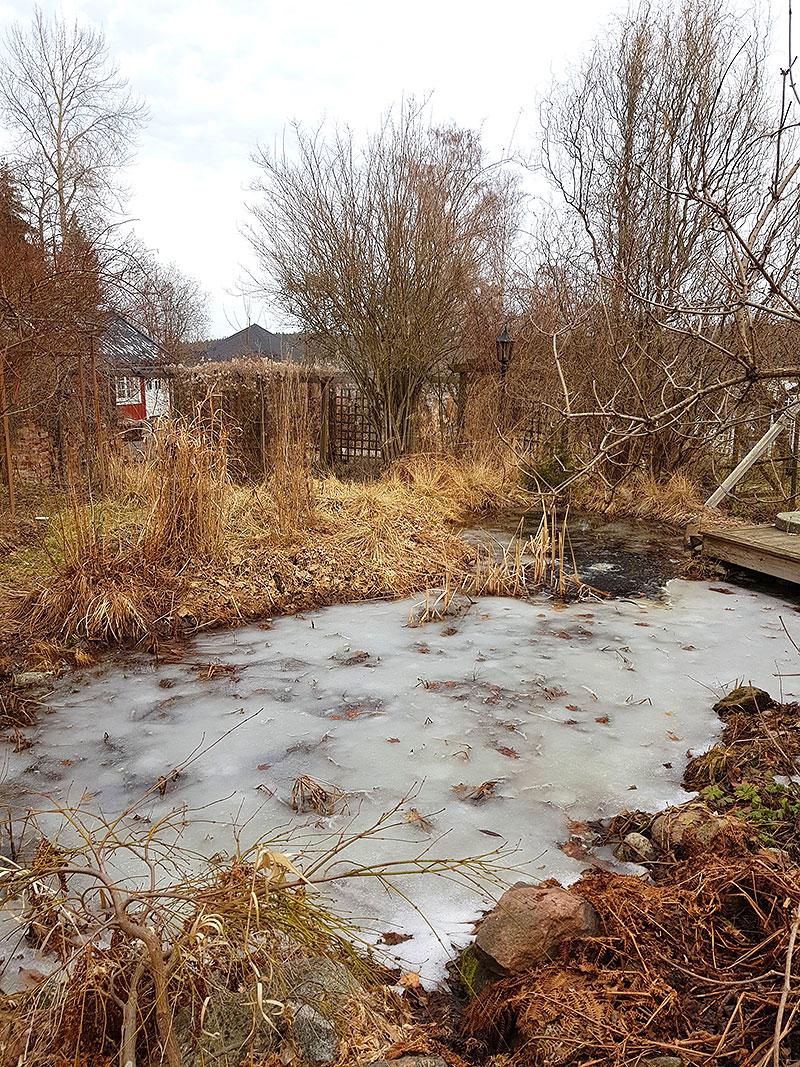 Trädgårdsdammen är fortfarande frusen